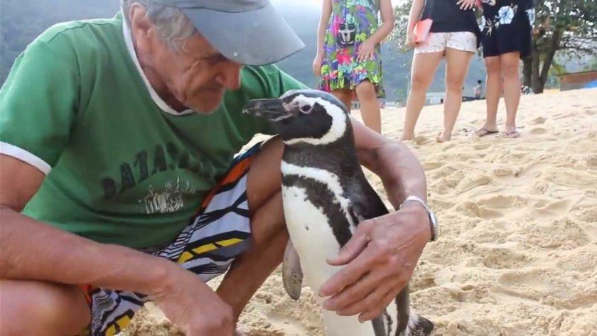 Din Din pingvinas