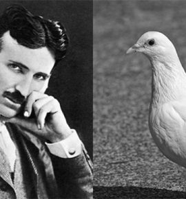 Nikola Tesla kartą išleido 2000 USD, kad padėtų sužeistam balandžiui