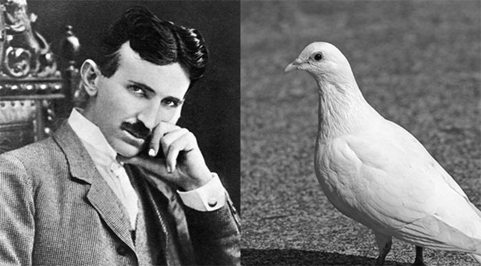 Nikola Tesla balandis