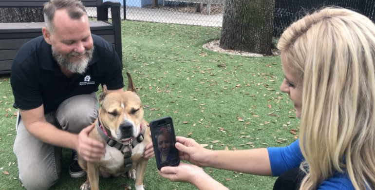Suns nuotrauka