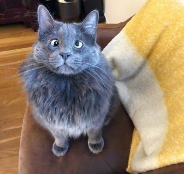 Susipažinkite su Baltarusija – priglaustas mielas žvairas katinas