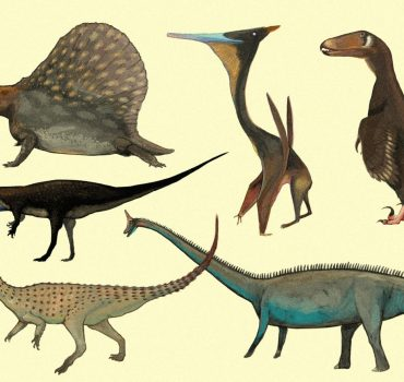 Jei šiuolaikinius gyvūnus pieštume vien tik pagal jų kaulus, kaip tai darome piešdami dinozaurus